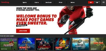 bodog website